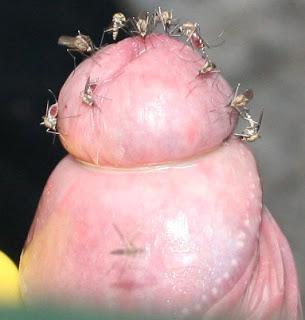 porno insecto