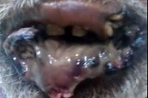 Labios y la lengua pudriendose
