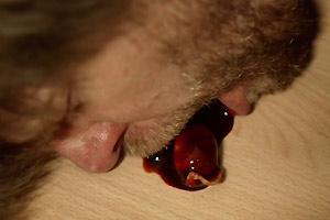 En el apocalipsis los hombres perderan sus testículos