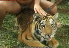 Imagen Sexo Zoofilico con un Tigre