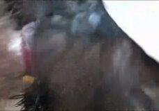 Imagen Hombre se folla a un gallo por el culo