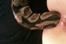 Se mete una serpiente viva por el culo