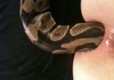 Imagen Se mete una serpiente viva por el culo
