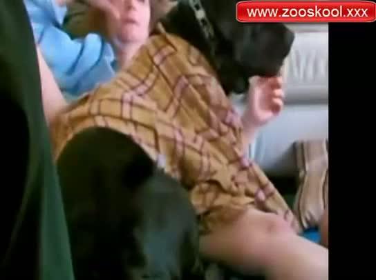 Enseña al perro a follar con su esposa