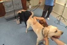 Jovenes Chinas aprenden a tener sexo con perros