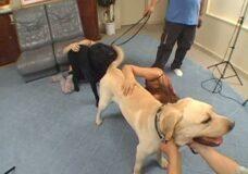 Imagen Jovenes Chinas aprenden a tener sexo con perros