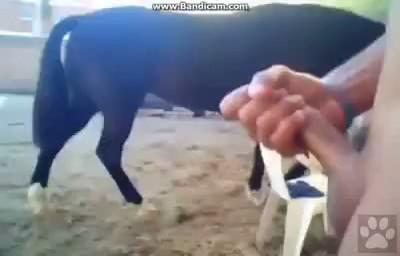 Hombre follando con su perra