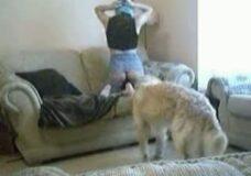 Imagen Su perro se la folla y la empotra contra el sofá