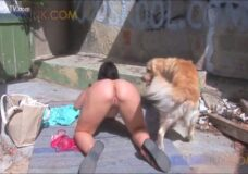 Imagen Zorra se lleva a la playa a su perro para tener sexo