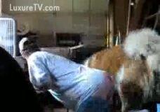 Imagen Perro cogiendo con su dueña