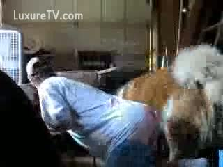 Perro cogiendo con su dueña