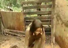 Imagen Mujer follando con un cerdo