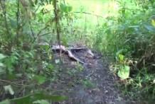 Mujer violada y cadaver en descomposición