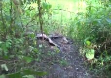 Imagen Mujer violada y cadaver en descomposición