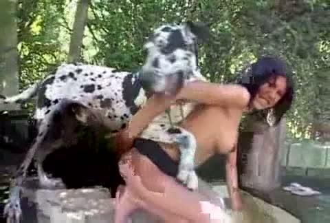 Perro Dálmata cogiendo con una latina