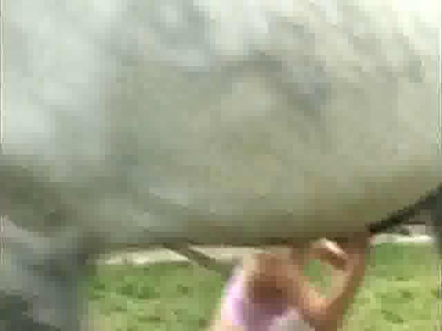 Rubia iniciada a la zoofilia con animales grandes