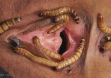 Imagen Le llena el coño de gusanos
