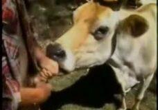 Imagen Hombre tiene sexo con una mula