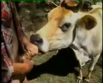 Hombre tiene sexo con una mula