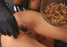 Le llena el coño de gusanos