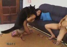Imagen Zorra tetona se sorprende por lo bien que se siente follando con un perro