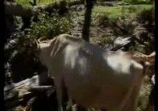 Imagen La vaca le chupa la polla y después se la folla