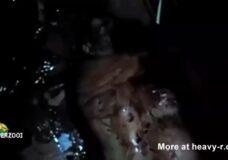 Imagen Mujer gorda sacrificada y asesinada como un cerdo