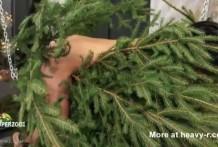 Torturada con un pino de navidad miniatura