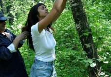 Zorra follada en la naturaleza y atada a un arbol