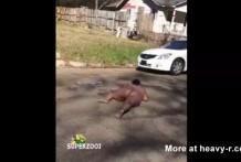 Negras Americanas desnudas y borrachas