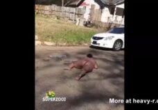 Imagen Negras Americanas desnudas y borrachas