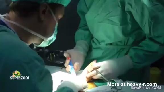De mujer a hombre operación de genitales