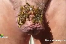 Polla cubierta de avispas en la miel