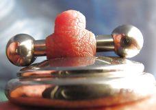 Pezones con piercings y cadenas 14