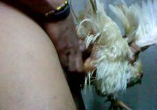 Imagen Cogiendo a una gallina, video de zoofilia salvaje