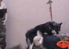 Imagen Atada y violada por perros a cuatro patas