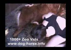 Imagen Chica Guarrilla tiene sexo con perros, caballos y ponis