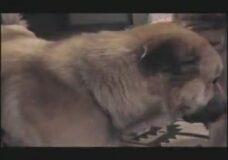 Imagen Mujer y perro Zoofilia