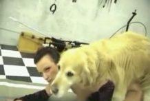 Se viste de puta para calentar a su perro