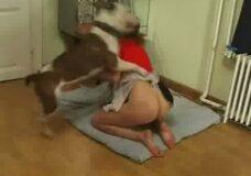 Imagen Su perro la coge por detras como si fuese una perra en celo