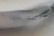 porno_zoofilia_videos