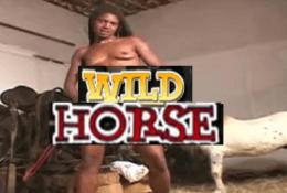 Negra Video XXX Zoofilia con caballo