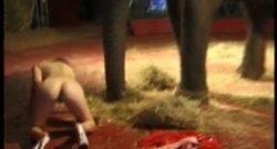 Zorra de circo quiere sexo con elefante